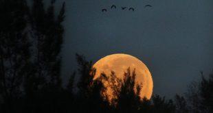 Tả đêm trăng ở quê em