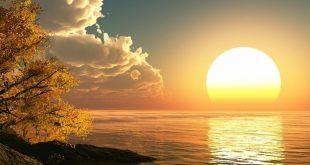 Hướng về phía mặt trời