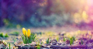 Đất trời sang xuân